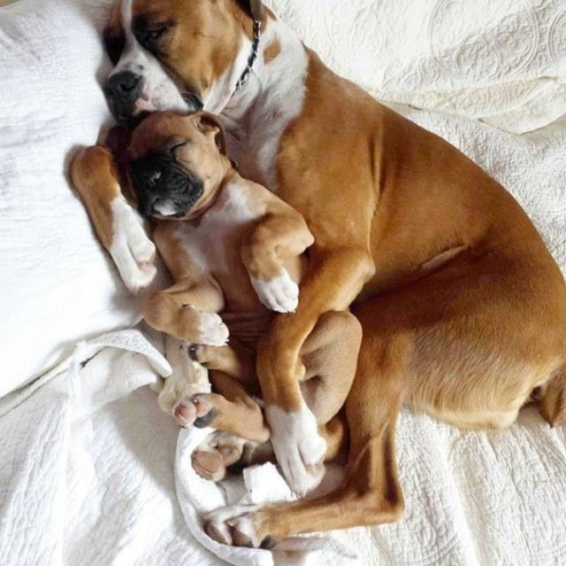 dormindo-com-o-papai