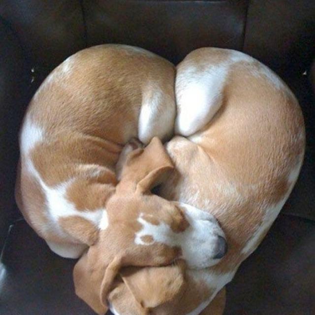 filhotes-dormindo