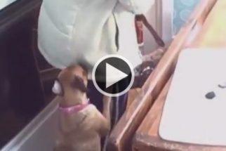 Fofura: cães se recusam a deixar tutora sair para o trabalho