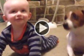 Fofura: cãozinho ensina bebê a engatinhar