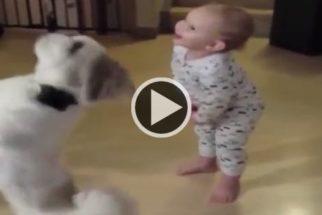 Fofura: Em vídeo, cãozinho faz graça em troca de petiscos e bebê o imita