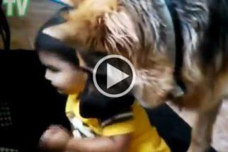 Fofura: vídeo mostra bebês dando de comer para seus cães