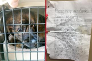 Cadela com paralisia nas patas é deixada em porta de abrigo para cães