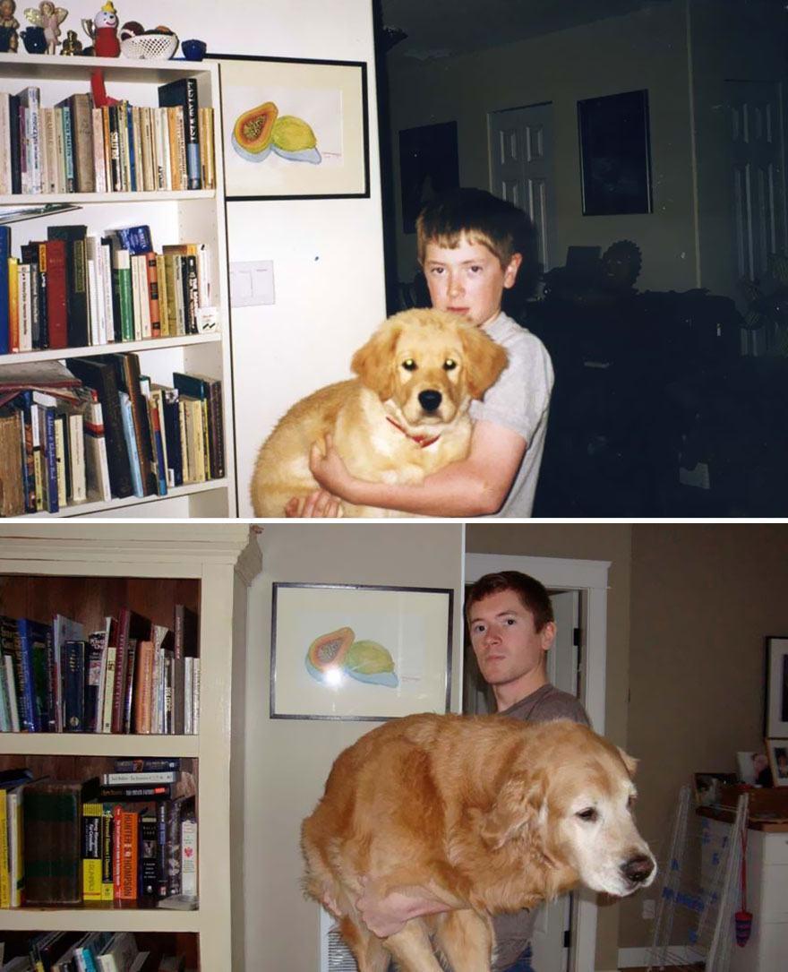 golden-retriever-dez-anos-depois