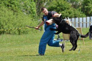 Conheça os níveis de energia do cão no adestramento