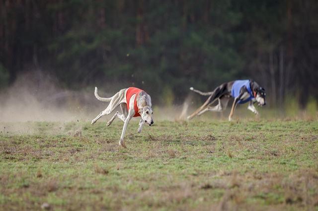 Imagem de cães correndo