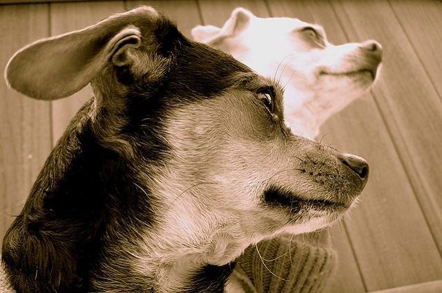 Imagem de cães meigos