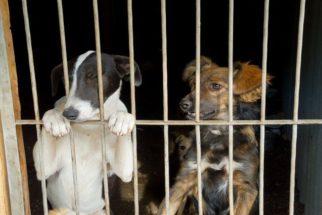 Deputados aprovam disque-denúncia de maus-tratos contra animais no DF