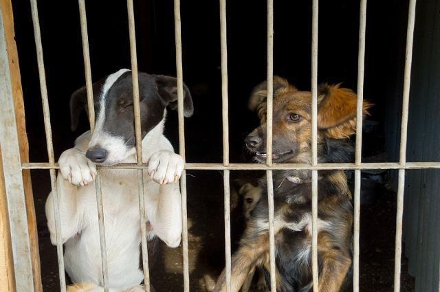 Imagem de cães presos atrás de grades