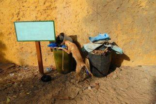 Por qual razão alguns cães gostam de revirar o lixo?