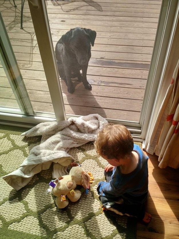 imagem-de-cao-olhando-crianca-por-vidro