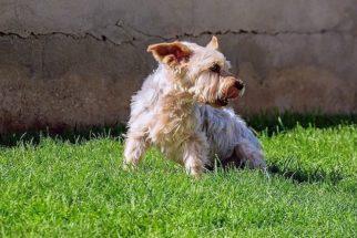 Como posso saber se o meu cão está assustado e o que devo fazer?