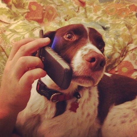 imagem-de-cao-segurando-telefone-celular_