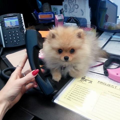 imagem-de-cao-segurando-telefone-celular___