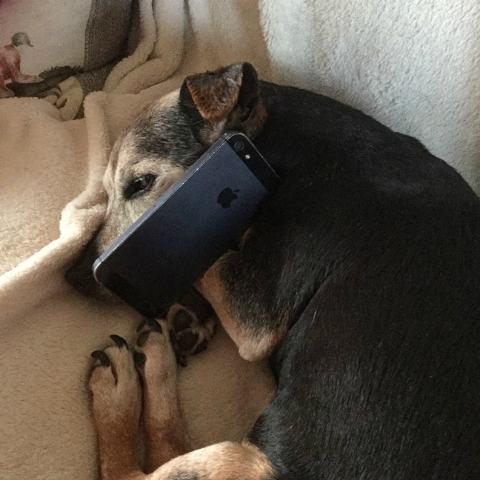imagem-de-cao-segurando-telefone-celular______
