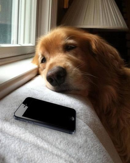 imagem-de-cao-triste-olhando-para-celular