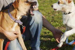 Técnicas para evitar as brigas do seu cão