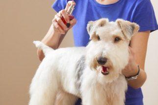 Perfumes caninos podem ser nocivos à saúde dos cães