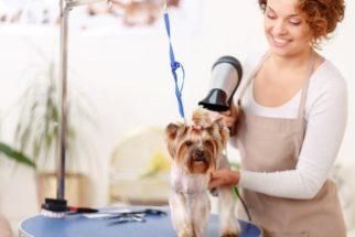 Usando secador em cães após o banho