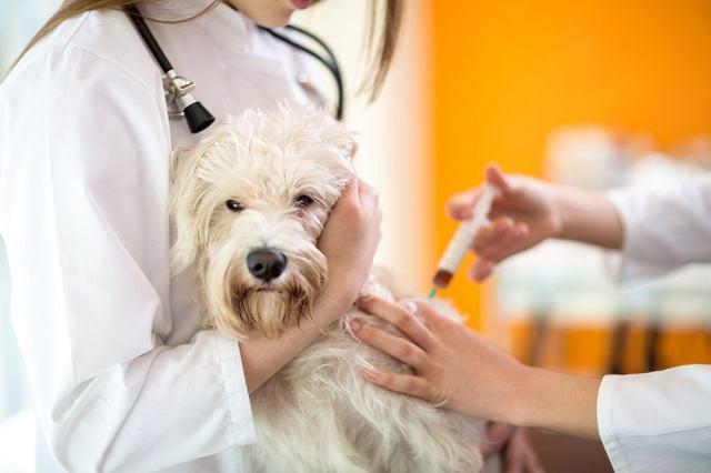 A importância da vacinação em cães desde filhotes