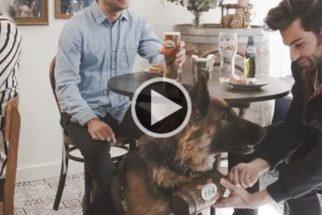 Londres tem experiência exótica ao receber bar com funcionários caninos