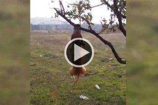 Para rir: Vídeo mostra cãezinhos fazendo bobagens hilárias