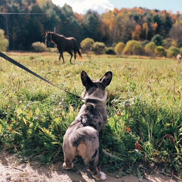 passeando-com-cachorro