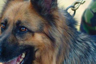 Cão militar salva pelotão após atacar membros do ISIS