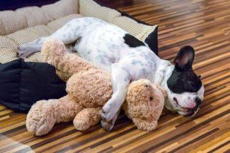 Saiba quais são os estágios de desenvolvimento dos cães