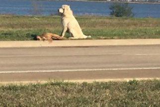 Cão fica famoso por não abandonar cachorro companheiro depois de morto