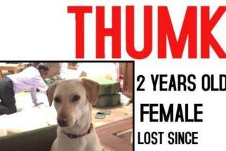 Cadela perdida há um mês reencontra família graças às redes sociais