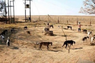 Cães estão sendo forçados a operar máquina de abastecimento