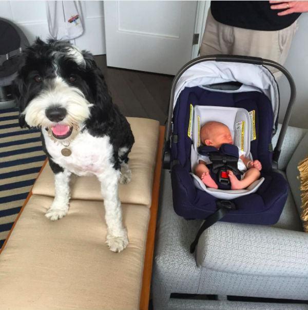 cachorro-ao-lado-de-bebe-em-carrinho