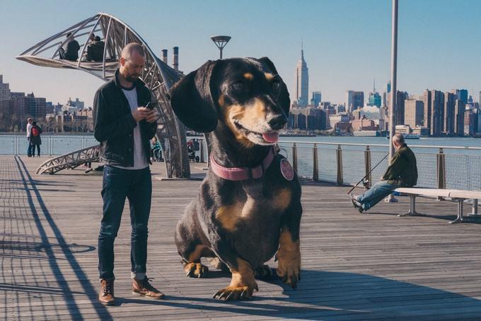 vivian-a-cadela-gigante-no-brooklyn