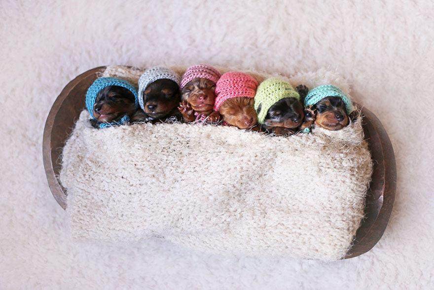 ensaio-fotografico-cadela-salsicha-ao-lado-de-filhotes