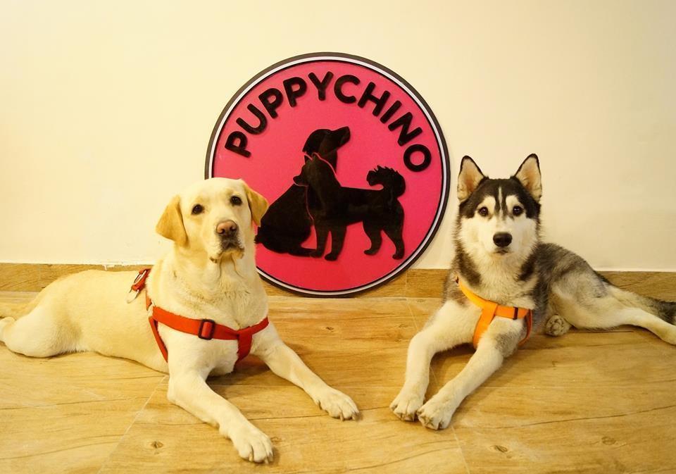 bobo-e-simba-mascotes-do-puppychino