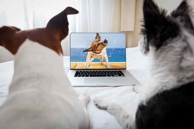 Brasil ganha primeiro canal de TV exclusivo para animais