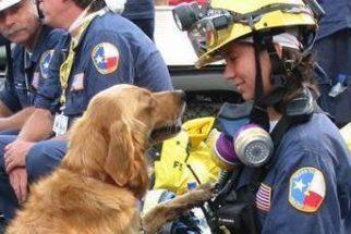 Morre último cão que atuou nos resgates ao Ataque do 11 de Setembro