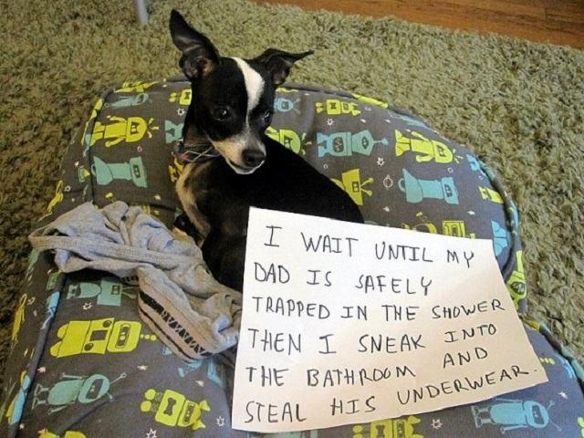 cãozinho-sempre-rouba-roupas-intimas-de-dono-enquanto-ele-toma-banho