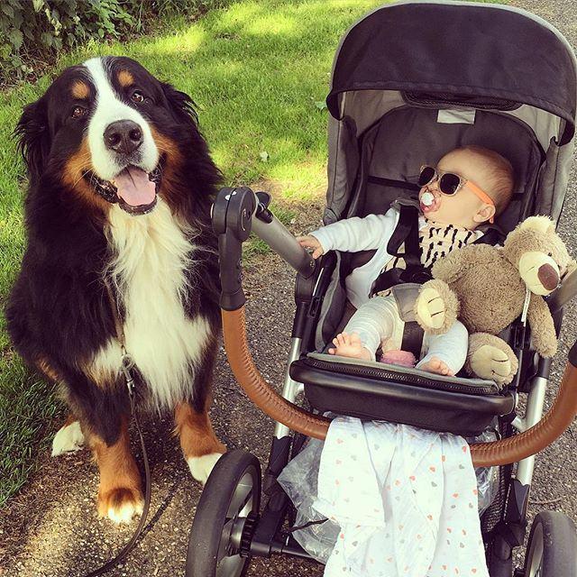 cachorro-ao-lado-de-carrinho-de-bebe