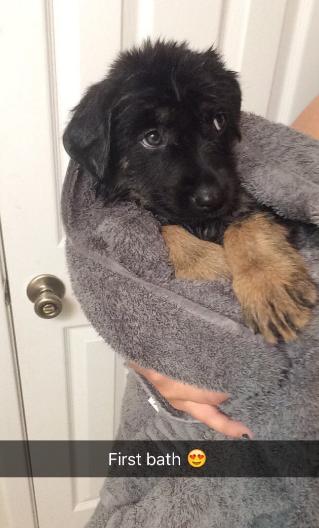 cachorro-apos-prineiro-banho