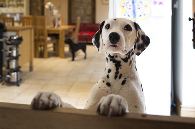 Sempre que o cão se comportar bem ofereça recompensas e bata palmas
