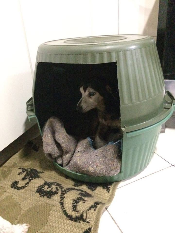 cachorro-dentro-de-casinha-feita-com-bacias