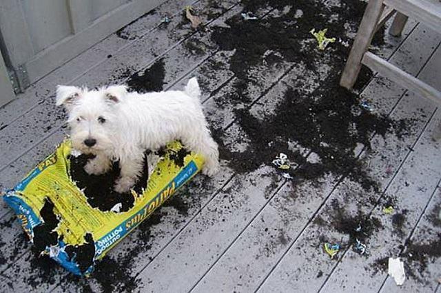 cachorro-espalhou-terra-por-todo-o-chao