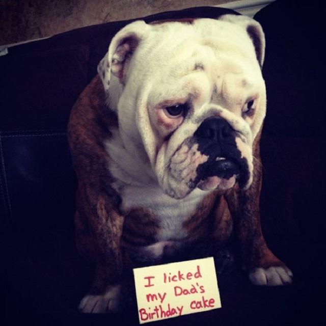 cachorro-lambeu-o-bolo-de-aniversario-do-tutor
