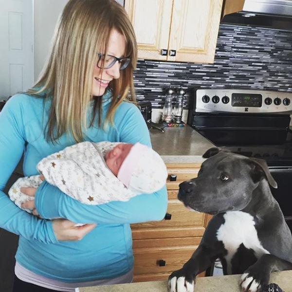 cachorro-olhando-bebe-em-braço-de-mulher