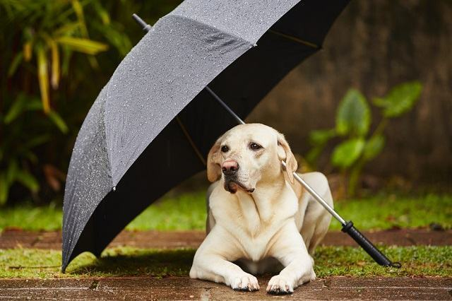 Cães precisam de cuidados redobrados em dias de chuvas