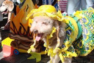 Nomes inspirados nas festas juninas para cães