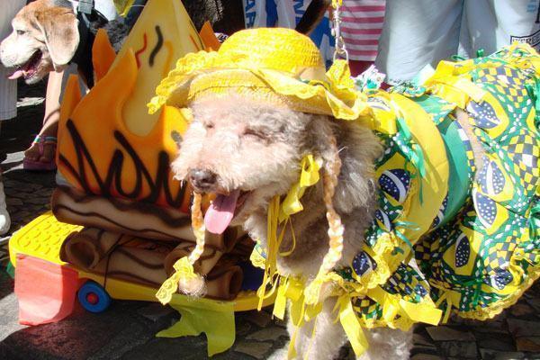 Nomes para cães inspirados nas festas juninas