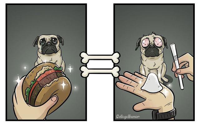 cao-viciado-em-hamburger